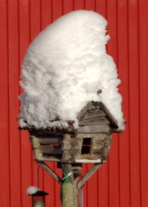 Bird feeding place on the Puolukkamaan Pirtit Reindeer farm in Pello in Finnish Lapland
