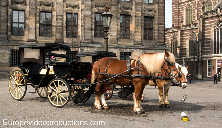 Horse and carriage on the Dam Square in Amsterdam in the Netherlands
