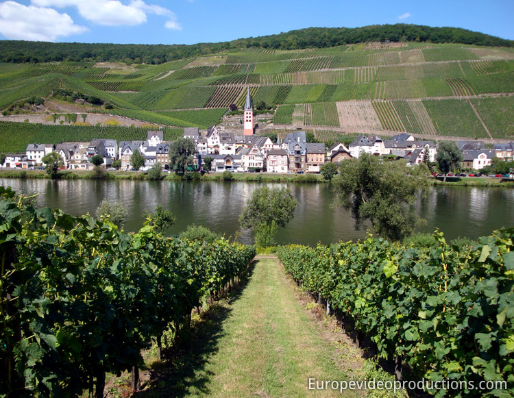 Mosel Wine road in Romantic Germany : Merl wine village close to Zell