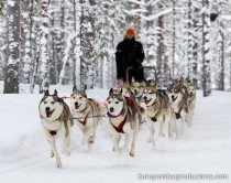 Husky Safari in Finnish Lapland