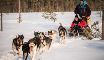 Piiru Forest Husky farm of Christmas House Safaris in Rovaniemi, Lapland
