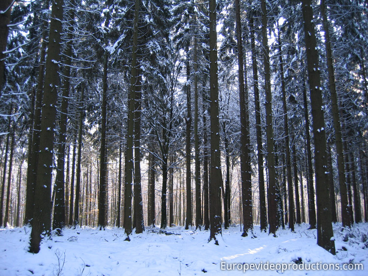 Ardennes Mountains in Wallonia in winter