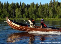 Lapland Reindeer Dog Mosku in Pello loves salmon fishing in Tornio River