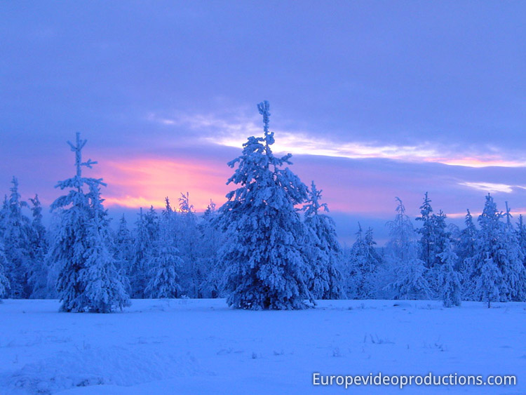 Blue moment in a forest in Rovaniemi in Lapland in Finland
