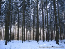 Ardennen in Wallonien im Winter