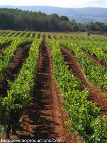 Vineyards in Luberon in Provence in France